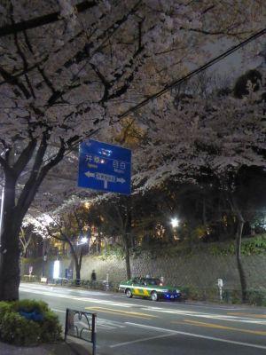 4月1日の夜桜